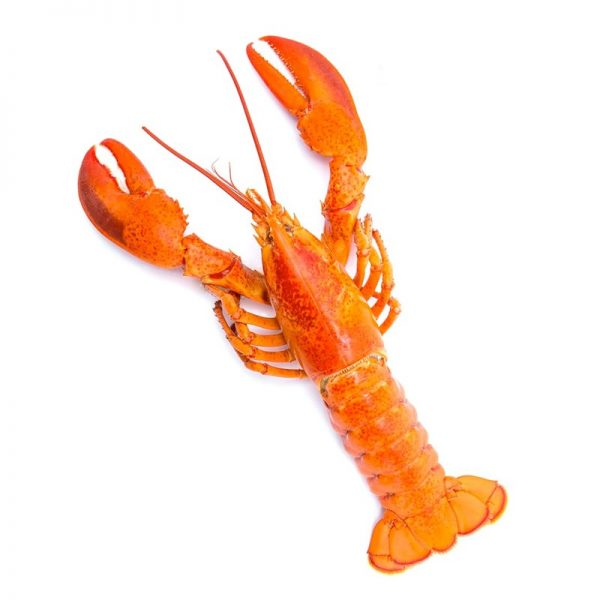 Palamidas Frozen Seafood | ΜΑΛΑΚΟΣΤΡΑΚΑ | ΑΣΤΑΚΟΙ | ΚΑΤΕΨΥΓΜΕΝΟ | ΙΝΔΙΑ | ΙΝΔΙΑ