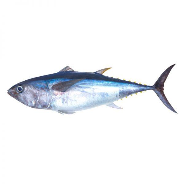 Palamidas Frozen Seafood | ΨΑΡΙΑ | ΤΟΥΝΑ | ΚΑΤΕΨΥΓΜΕΝΟ | ΙΣΠΑΝΙΑ | ΙΣΠΑΝΙΑ