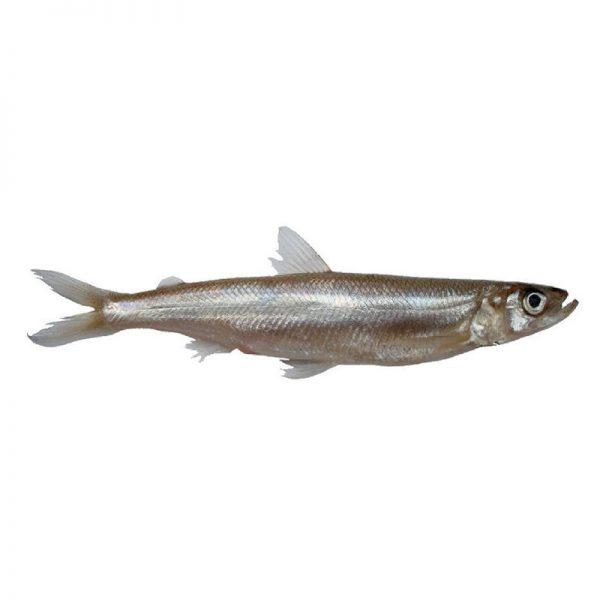 Palamidas Frozen Seafood | ΨΑΡΙΑ | ΑΘΕΡΙΝΑ | ΚΑΤΕΨΥΓΜΕΝΟ | ΤΟΥΡΚΙΑ | ΤΟΥΡΚΙΑ