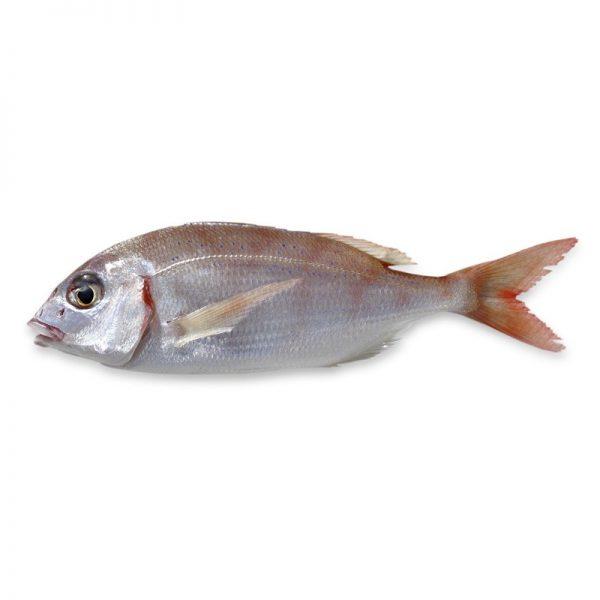Palamidas Frozen Seafood   ΨΑΡΙΑ   ΛΙΘΡΙΝΙΑ   ΚΑΤΕΨΥΓΜΕΝΟ   ΑΤΛΑΝΤΙΚΟΥ   ΑΤΛΑΝΤΙΚΟΥ