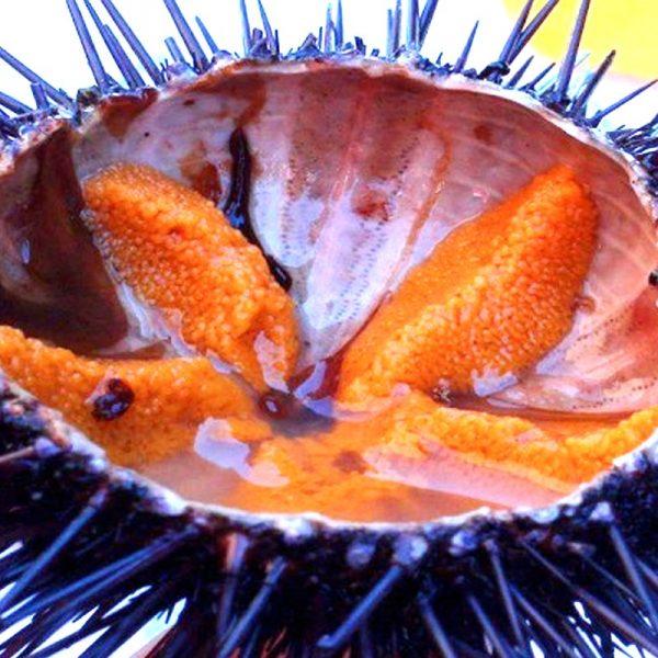 Palamidas Frozen Seafood | DELICATESSEN | ORIGINAL | ΚΑΤΕΨΥΓΜΕΝΟ | ΤΟΥΡΚΙΑ | ΤΟΥΡΚΙΑ